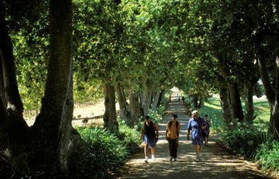 Groot Constantia Cellar Tour and Museum walkway under trees