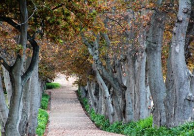 Groot Constantia Cellar Tour and Museum walkway and trees with autumn leaves