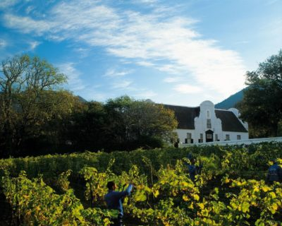 Groot Constantia Estate Tour workers pruning vines