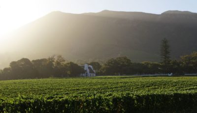 Groot Constantia Estate Tour sun setting over vines with mountain in background